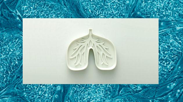 Scientists grow mini-lungs to aid the study of cystic fibrosis